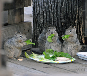 Photo of Squirrels Eating Breakfast